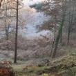 forêt-cecchetto