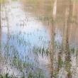 prairie-inondée