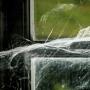 Sophie Bourzeix -toile d'araignée dans la fenêtre